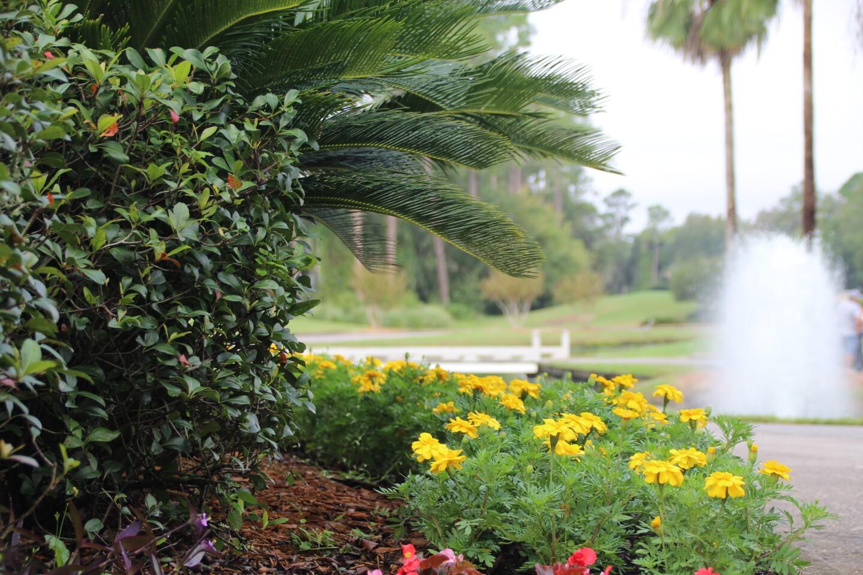 flowers fountain palm trees - 2020 - AJGA Billy Horschel Junior CHampionship presented by Zurich  (7).JPG